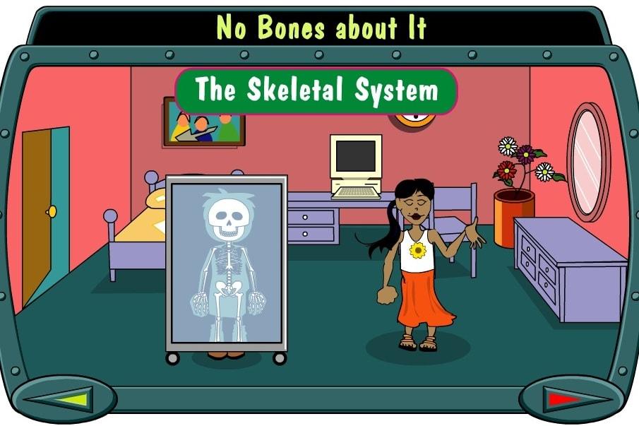 Кости скелета система