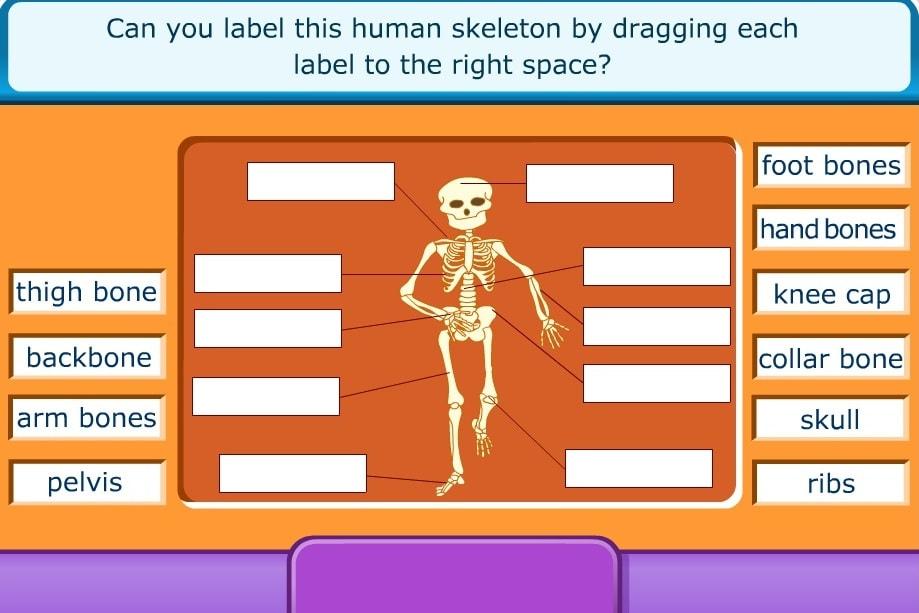 Назови части скелета