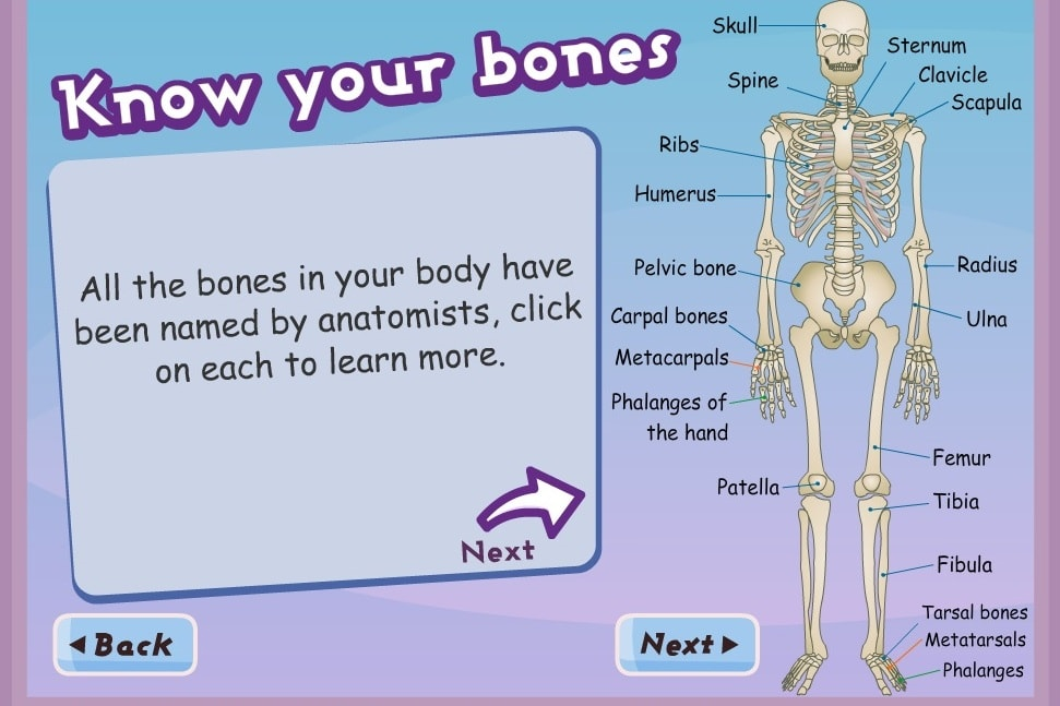 Университетский скелет