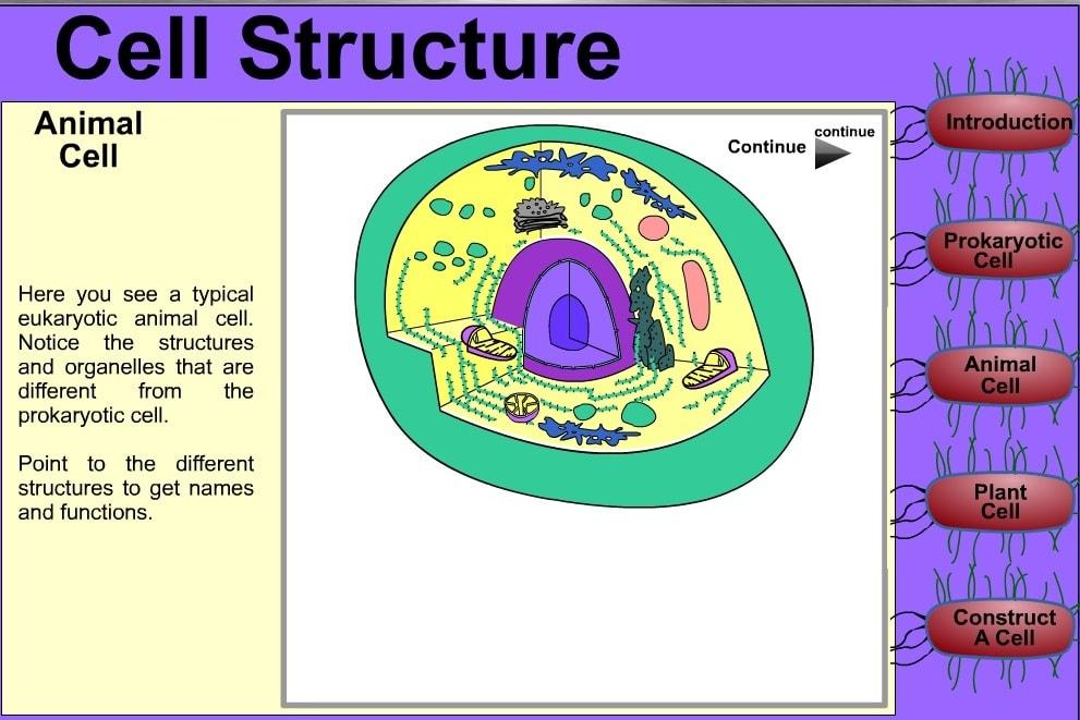 Структура клетки человека