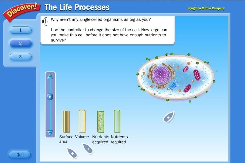 Процессы в клетке человека