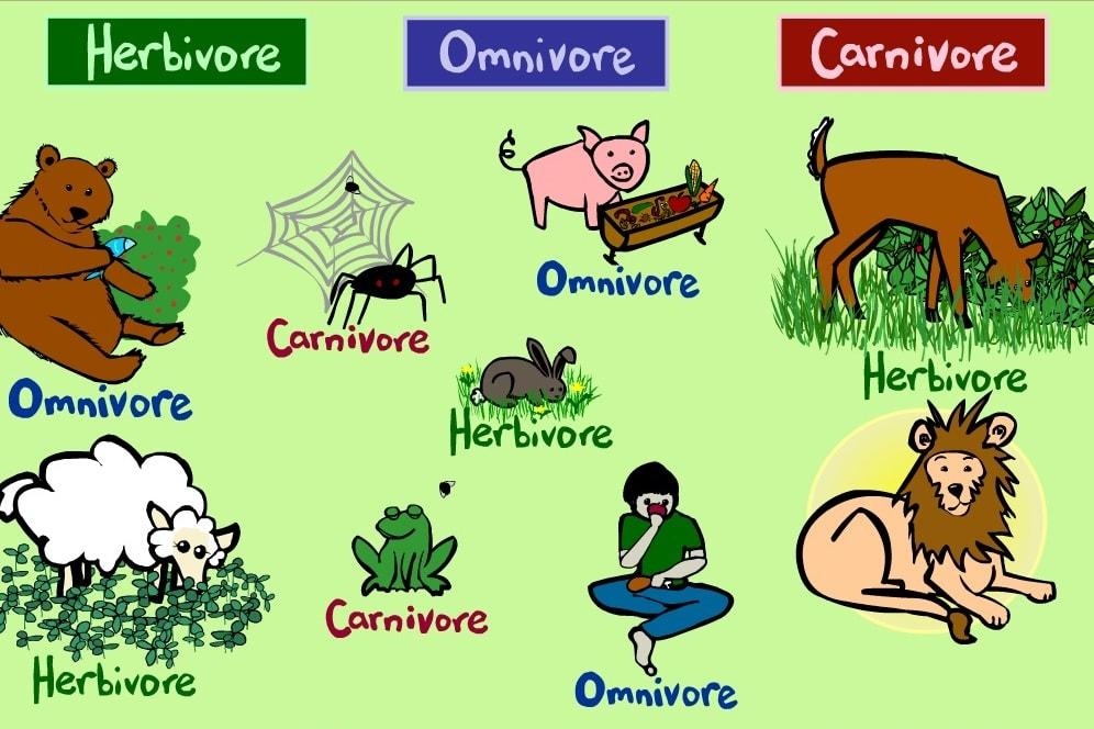 Рацион животных