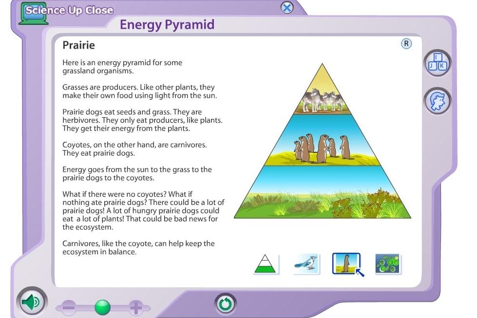 Пирамида питания животных
