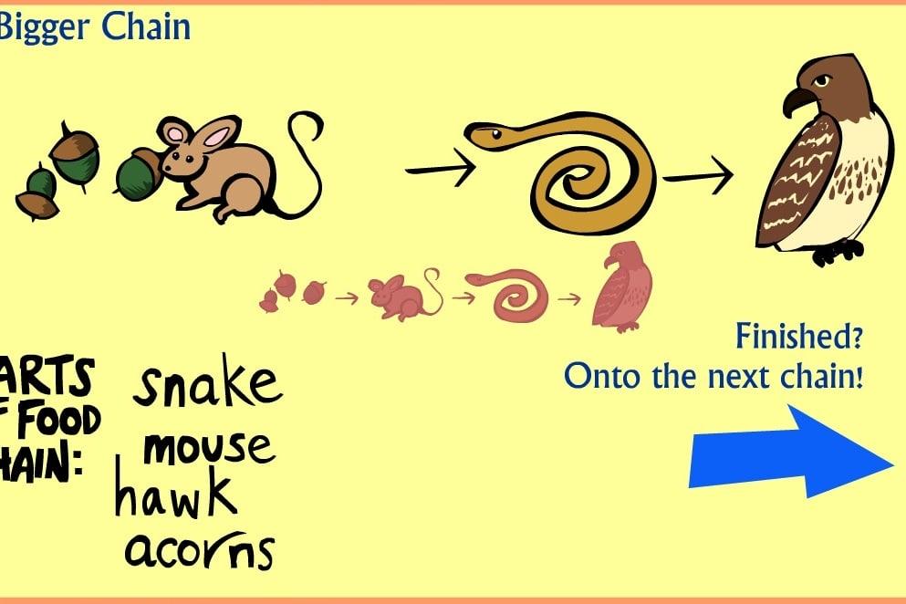 Животные пищевой цепи