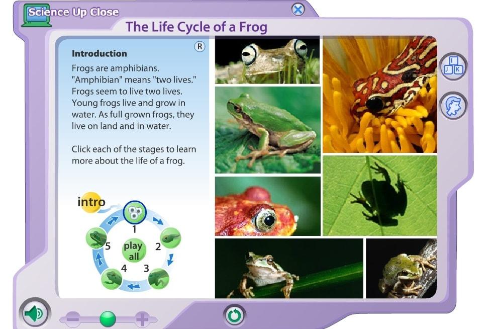 Жизненый цикл лягушек