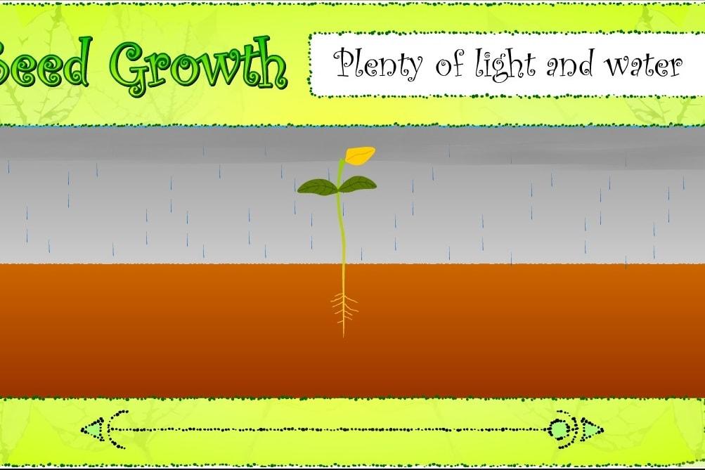 Растения свет и вода