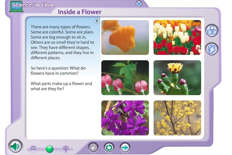 Внутри цветка