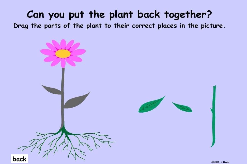 Собери растение