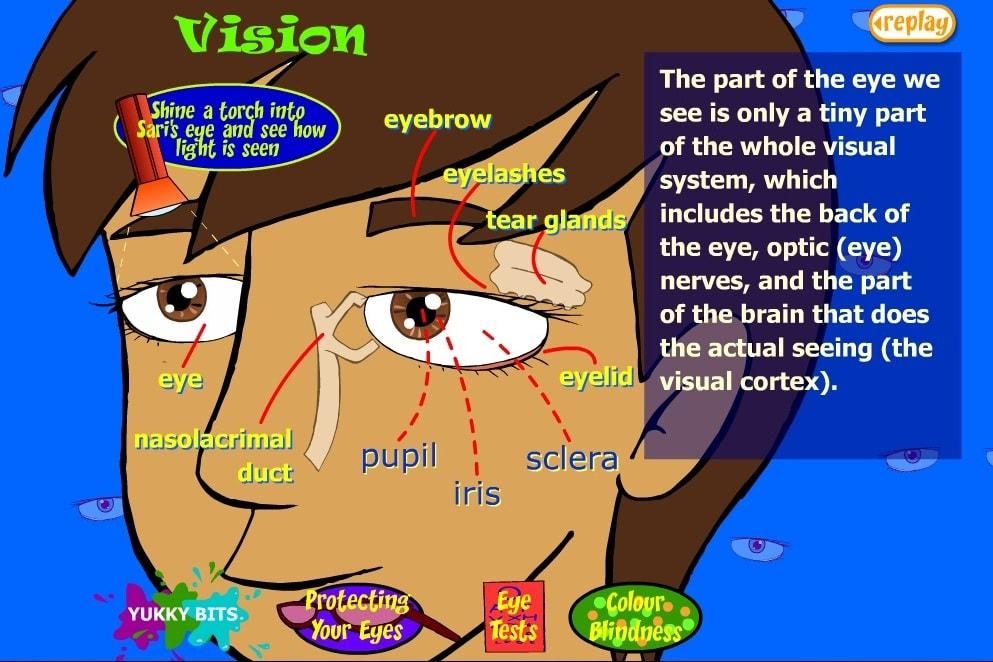 Части тела глаза