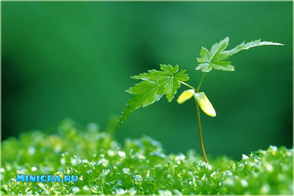 Растения игры